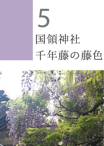 5 国領神社 千年藤の藤色