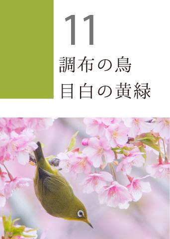 11 調布の鳥 目白の黄緑