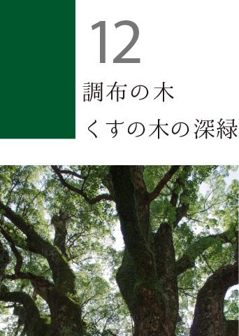 12 調布の木 くすの木の深緑